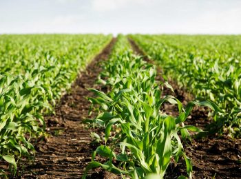 Agribusiness. Get to know here!